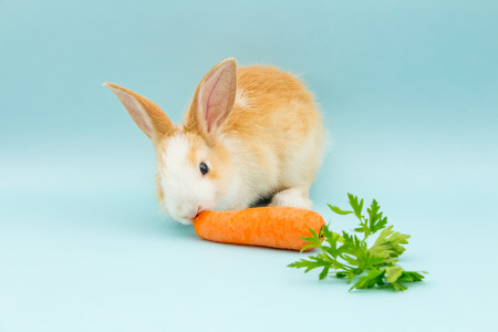 Photo for Adorable rabbit eating - Royalty Free Image