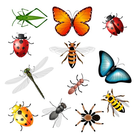 Collection of vector insects - bugs and invertebrates