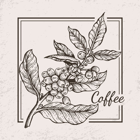 Illustration for Coffee Berries Twig Icon Vector Illustration - Royalty Free Image