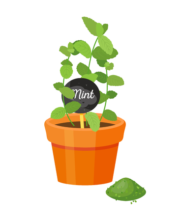Ilustración de Mint plant and label with name, leaves powder of green color, emblem title, spicy melissa, spice condiment vector illustration isolated on white - Imagen libre de derechos