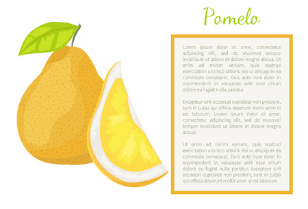 Ilustración de Pomelo exotic fruit whole and cut vector poster frame for text. Tropical food, similar to grapefruit or pear, dieting vegetarian citrus with leaf - Imagen libre de derechos