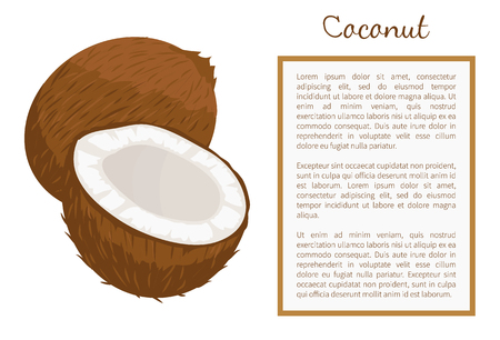 Illustration for Coconut whole and cut exotic fruit vector poster frame for text. - Royalty Free Image