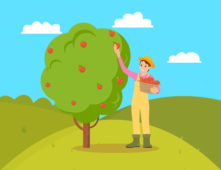 Illustration pour Farmer gathering apples from fruit tree. Female holding wicker basket with fresh organic natural products. Garden and harvesting working season vector - image libre de droit