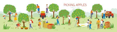 Illustration for People picking apples in garden vector, man and woman gathering fruits from trees. Trucks and cars for transportation of food, summertime farming. Picking apples from tree to basket. Harvest festival - Royalty Free Image