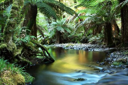 Rainforest river, in golden early morning light.  Yarra Ranges, Victoria, Australia.