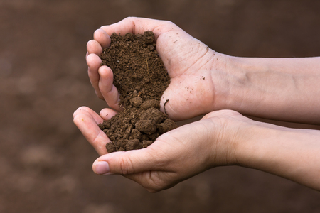 Photo for fertile soil in hands of women - Royalty Free Image