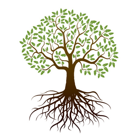 Illustration pour Oak Tree and Roots. Vector Illustration. - image libre de droit