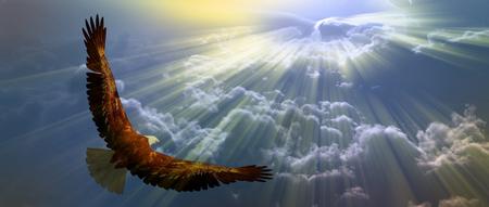 Foto de Eagle in flight above tyh clouds - Imagen libre de derechos