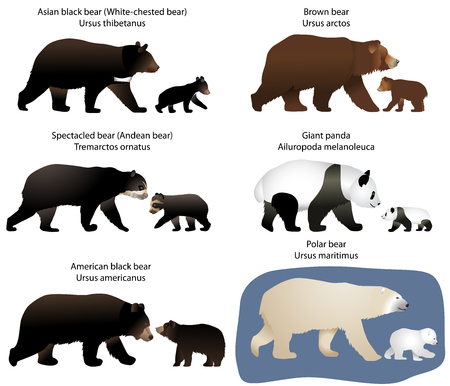 Ilustración de Collection of different species of bears and bear-cubs - Imagen libre de derechos