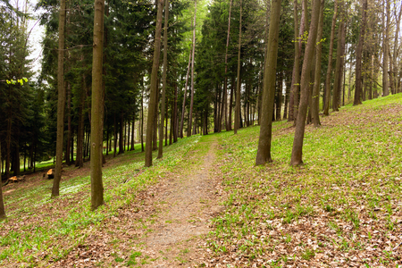 Photo for Road in a beautiful forest in the morning - Royalty Free Image