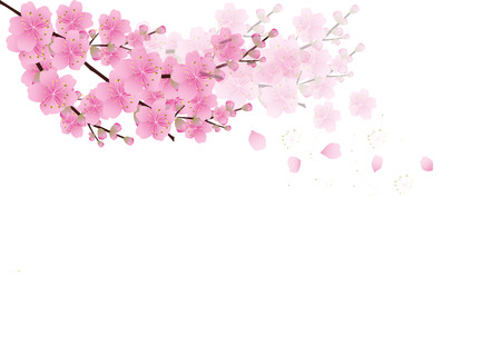 Ilustración de Sakura flowers background . cherry blossom isolated white background - Imagen libre de derechos