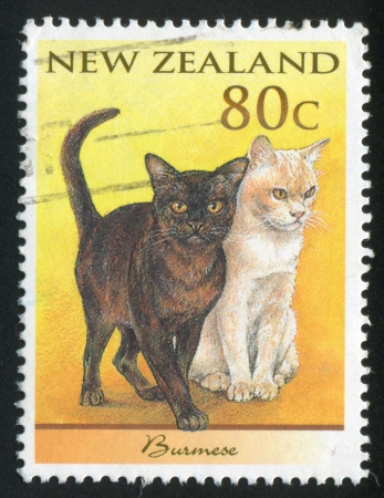 NEW ZEALAND - CIRCA 1998: stamp printed by New Zealand, shows Domestic Cat, Burmese, circa 1998