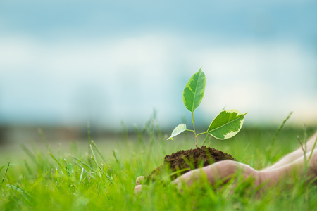 Photo for Human is holding a small green plant with soil in it's hands over the green grass background - Royalty Free Image