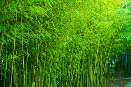 the bamboo forest in spring mural