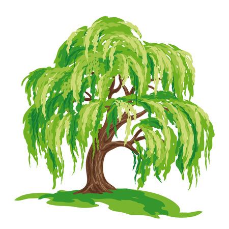 Illustration pour Vector drawing of willow tree. EPS8. - image libre de droit