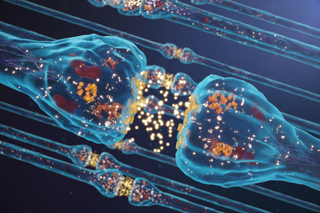 Foto de Synaptic transmission, nervous system receptors. Concept consciousness. Brain synapses. Transmission synapse, impulses in brain, information transfer at the cellular or atomic level, 3D Rendering - Imagen libre de derechos
