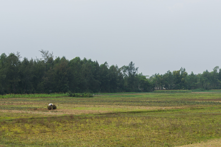 Photo for Vietnames farmer worked on the field in rural Vietnam - Royalty Free Image
