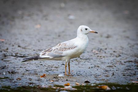 Foto de River gull on coast of river in wild nature - Imagen libre de derechos