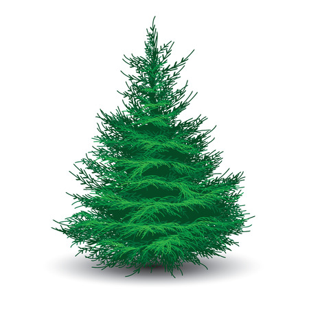Illustration pour Green spruce tree isolated on white. Realistic vector illustration - image libre de droit