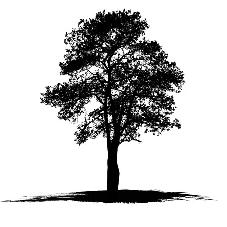 Illustration pour Vector drawing of the tree on white background - image libre de droit