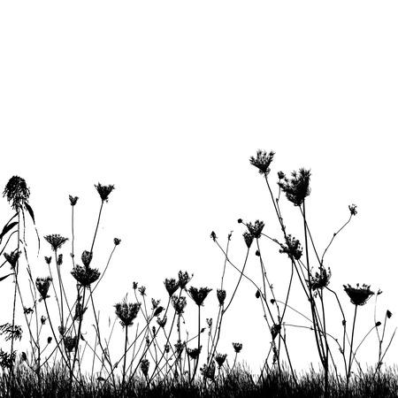 Illustration pour Natural wild plants on grass silhouette on white background, vector illustration - image libre de droit