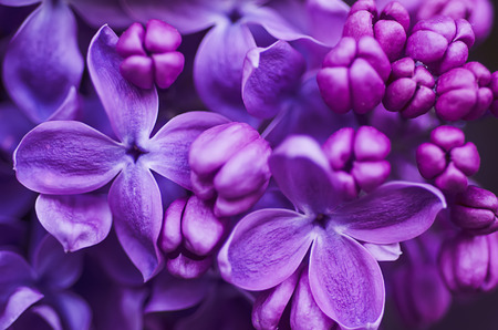 Photo pour Lilac flowers background - image libre de droit