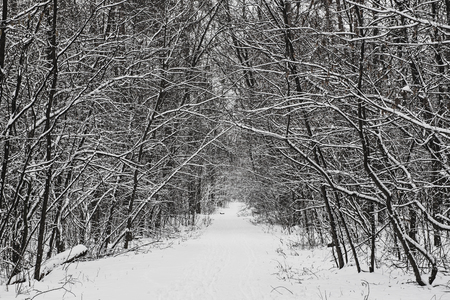 Photo for Winter forest with path and trees, covered with snow, natural outdoor seasonal background - Royalty Free Image