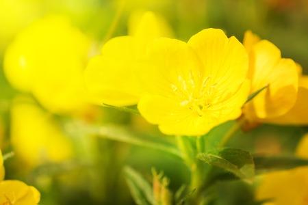 Photo pour Beautiful Yellow flowers - image libre de droit