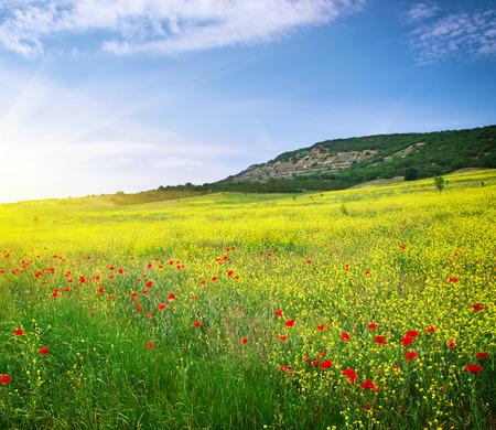 Photo pour Spring meadow of flowers. Nature composition. - image libre de droit