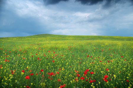 Photo pour Spring flower meadow. Composition of nature. - image libre de droit