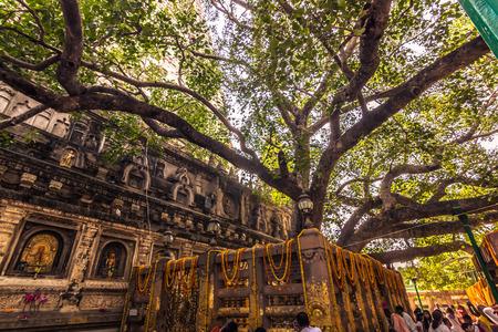 Foto de The Bodhi tree, where the Buddha reached Nirvana in Bodhgaya, India - Imagen libre de derechos