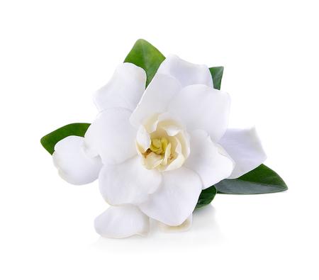 Photo pour Gardenia flowers on white - image libre de droit