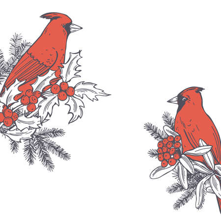 Hand drawn winter birds.Red cardinals on white backgrounds. Vector sketch illustration.