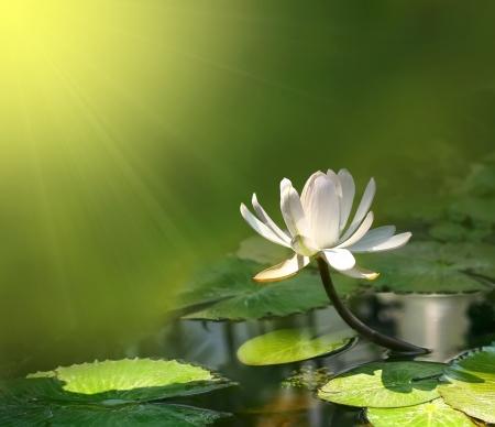 Foto de water lily on a green background  - Imagen libre de derechos