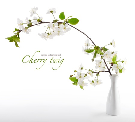 Photo for cherry twig in bloom in vase - Royalty Free Image