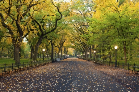 Photo for Central Park  Image of  The Mall area in Central Park, New York City, USA at autumn  - Royalty Free Image