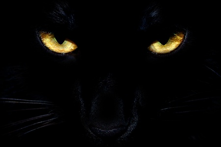Photo for Wild black cat eyes coming out of the dark - Royalty Free Image