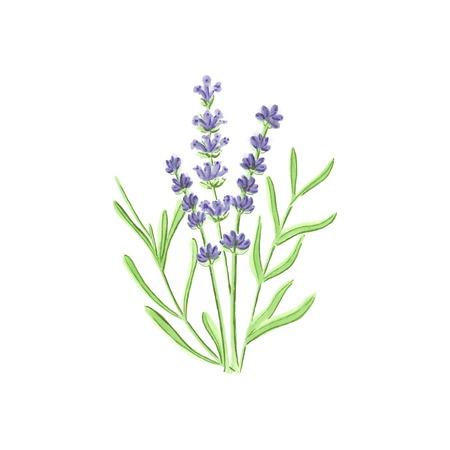 Illustration pour Watercolor lavender on the white background, aquarelle. Vector illustration. Hand-drawn floral decorative element useful for invitations, scrapbooking, design. - image libre de droit