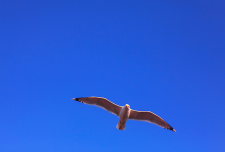 Photo for flying seagull - Royalty Free Image