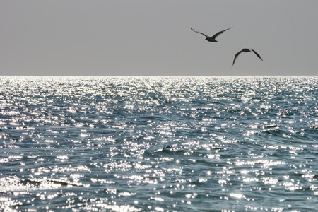 Foto de Seagulls soaring above the sea in rays of the sun at sunset in the summer - Imagen libre de derechos