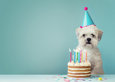 Foto de Cute dog with party hat and birthday cake - Imagen libre de derechos