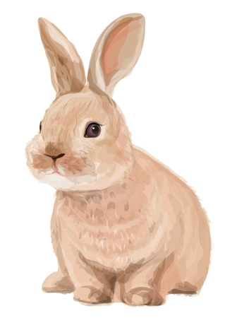 Vector of cute rabbit isolated on white background