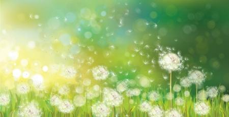Illustration pour Vector of spring background with white dandelions   - image libre de droit
