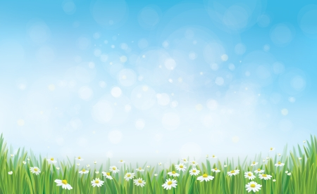 Illustration pour Vector sky background with grass and chamomiles. - image libre de droit