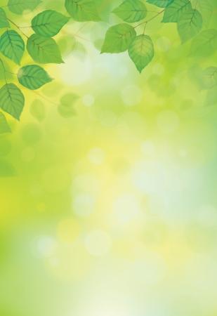 Illustration for Vector green leaves on sunshine background  - Royalty Free Image