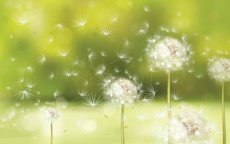 Illustration for Vector spring background with white dandelions  - Royalty Free Image