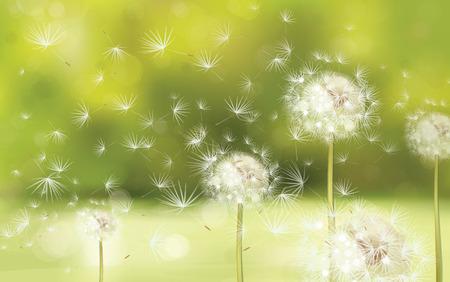 Illustration pour Vector spring background with white dandelions  - image libre de droit