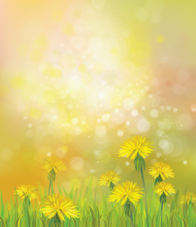 Illustration pour Vector of spring background with yellow dandelions. - image libre de droit