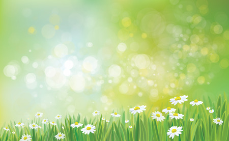 Illustration pour Vector nature background with grass and chamomiles. - image libre de droit