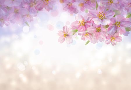 Photo pour Blossoming branches of sakura tree, spring  bokeh background. - image libre de droit